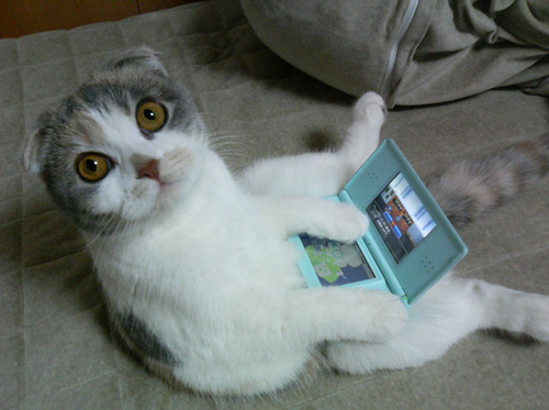 I is coding on your DS